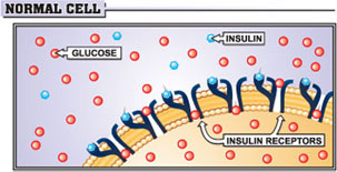 Insulin Resistance Normal Cell